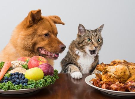 Alimentación del Perro y del Gato, ¿Cuál es la diferencia?.
