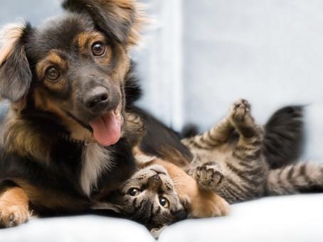 ¿Tu personalidad influye para elegir entre Perros y Gatos?