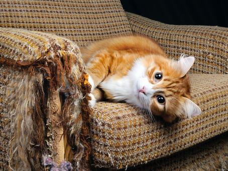 ¡No más muebles arañados! Soluciones para evitar que tu gato arañe los muebles.
