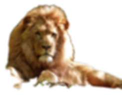 AURORA LION_edited.png