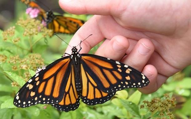 butterfly-8.jpg
