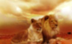 lion-safari-afika-landscape-40756.jpeg