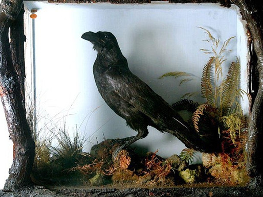 Grip The Raven -  inspiration to America's foremost gothic superstar