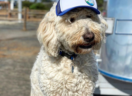 Trucker Hats, for Dogs!
