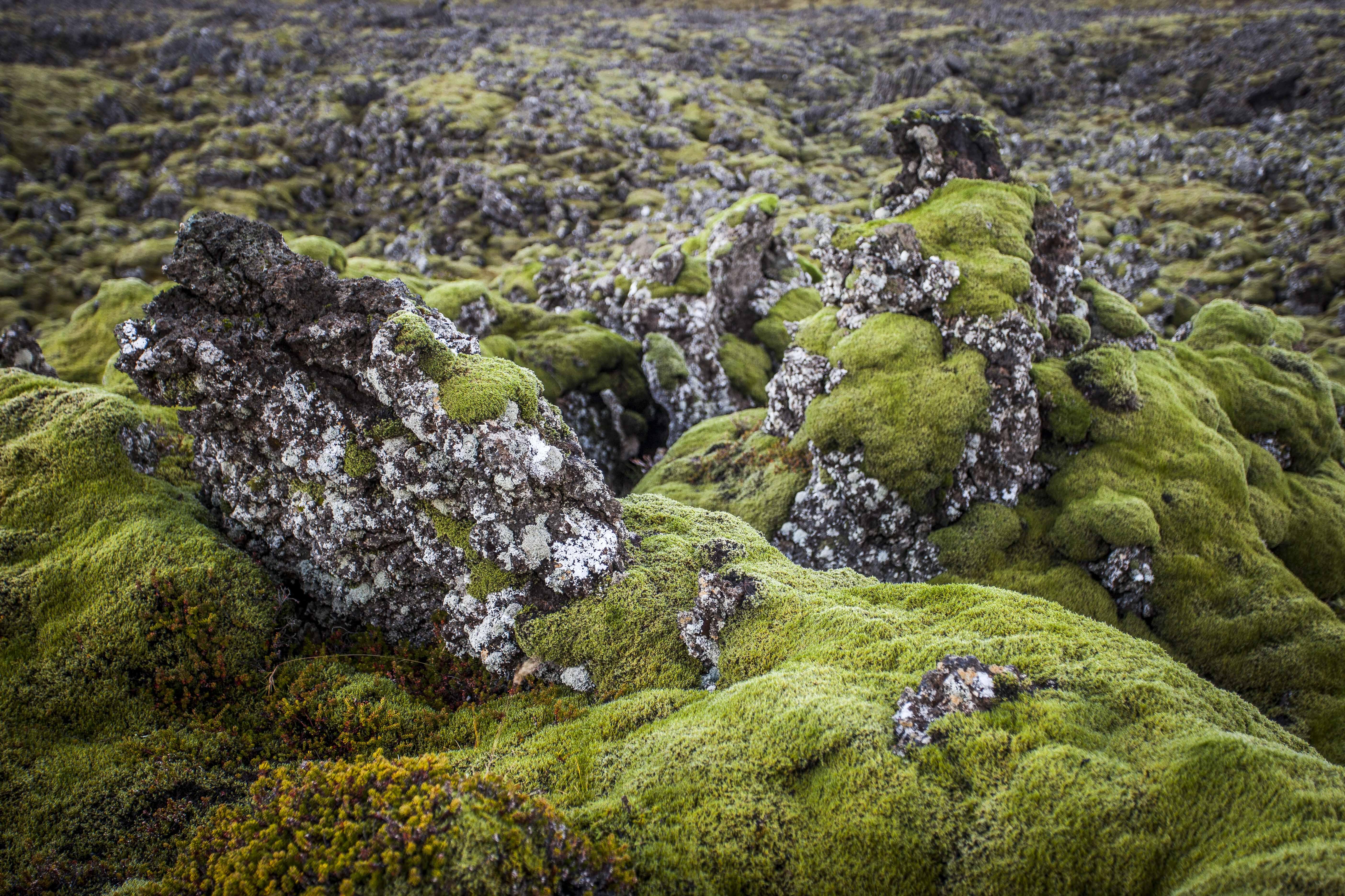 Lava Rocks. Iceland. 2016.