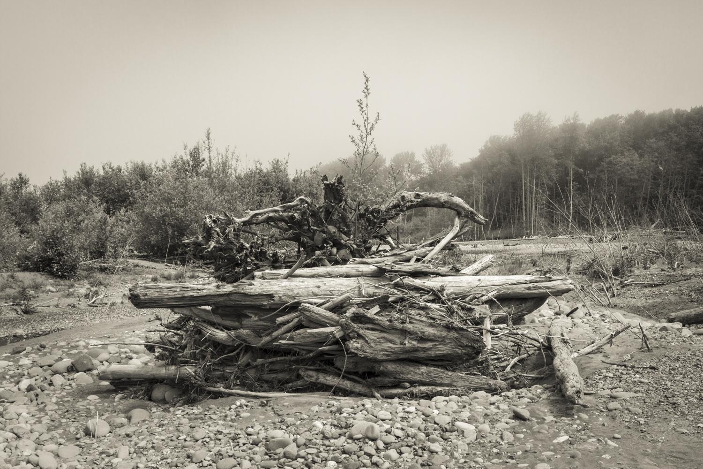 Driftwood, 2015.