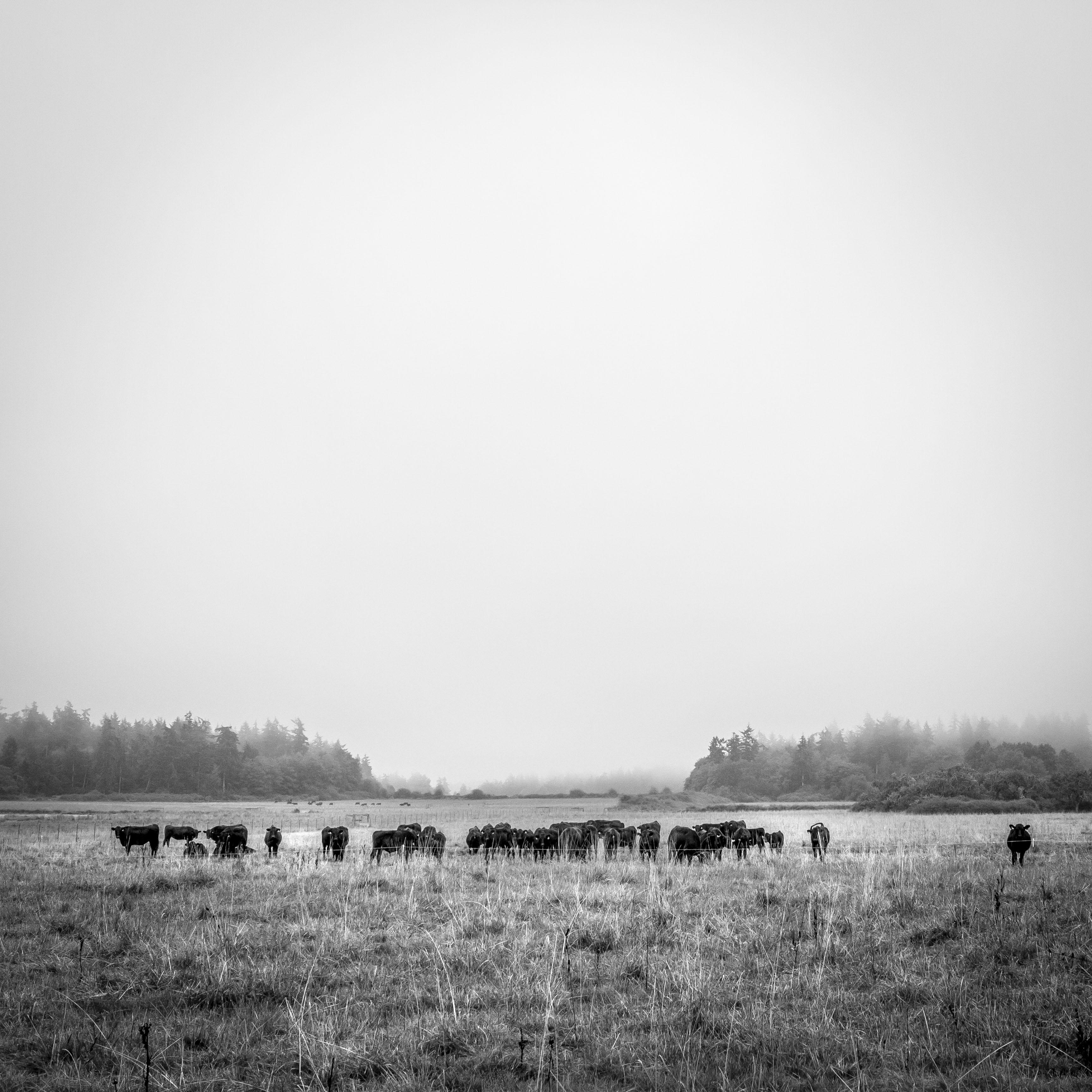 Sweet Grass Farm. 2014. Lopez, Island, WA.