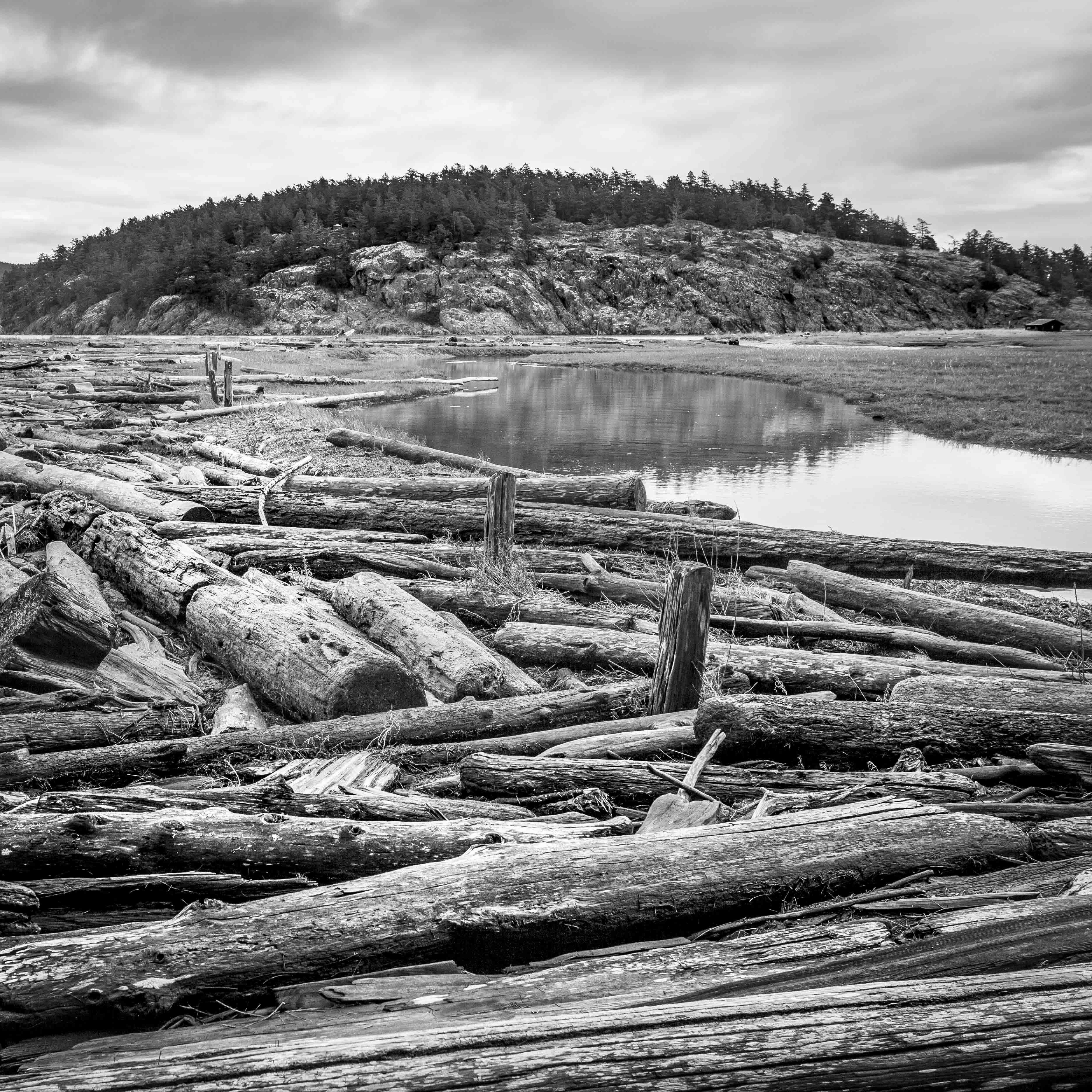 Drift Logs. Spencer Spit SP. 2017. Lopez, Island, WA.