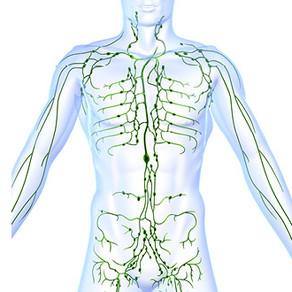 Lets talk Lymphatic System