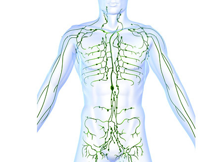 Lets talk Lymphatic System