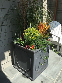 Fall front porch planter with peppers, ivy, goldenrod, grass and curly willow