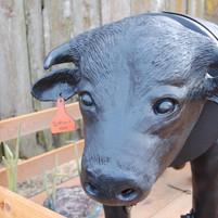 Bovine BBQ Detail