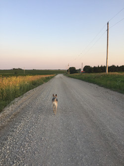 walks on the farm