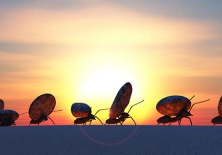 Ameisenkreis - Gedankliche Grenzen und wie wir sie überwinden