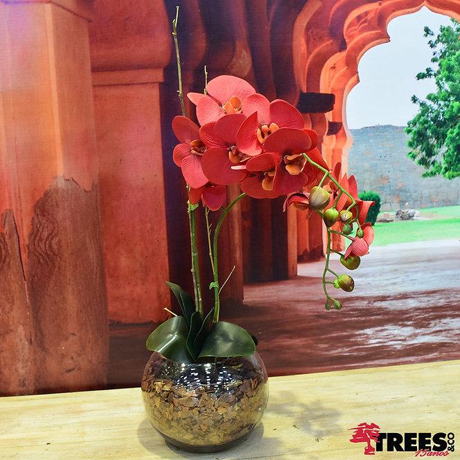 Orquidea Real Vermelha x2 VD Aquário M