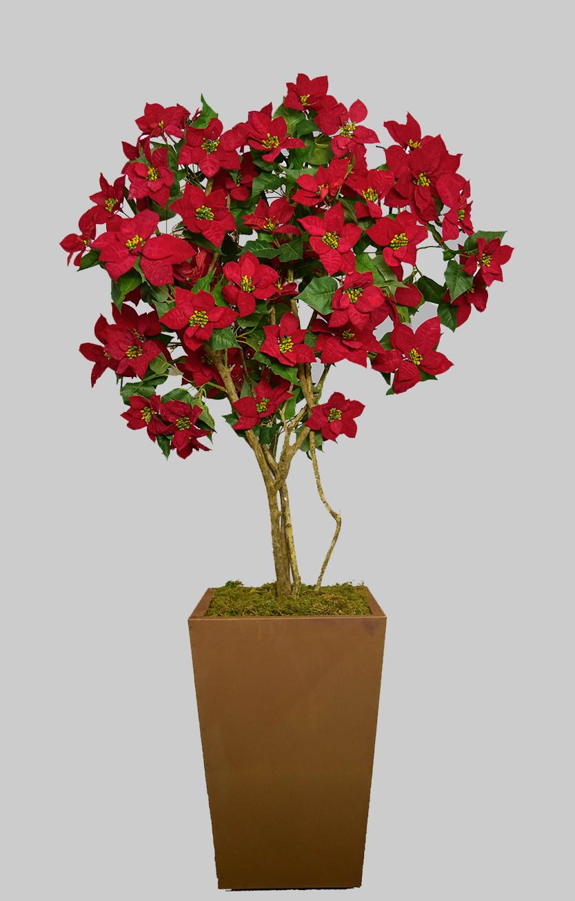 Arvore Poinsettia