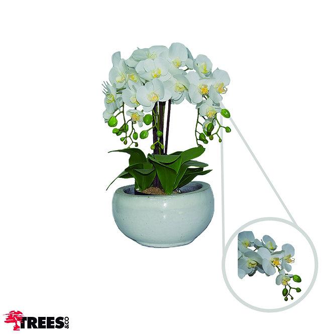 Orquídea Branca x5 s/ vaso