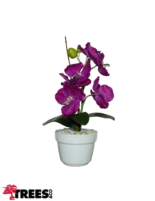 Orquídea Wanda Beauty_Vaso Branco