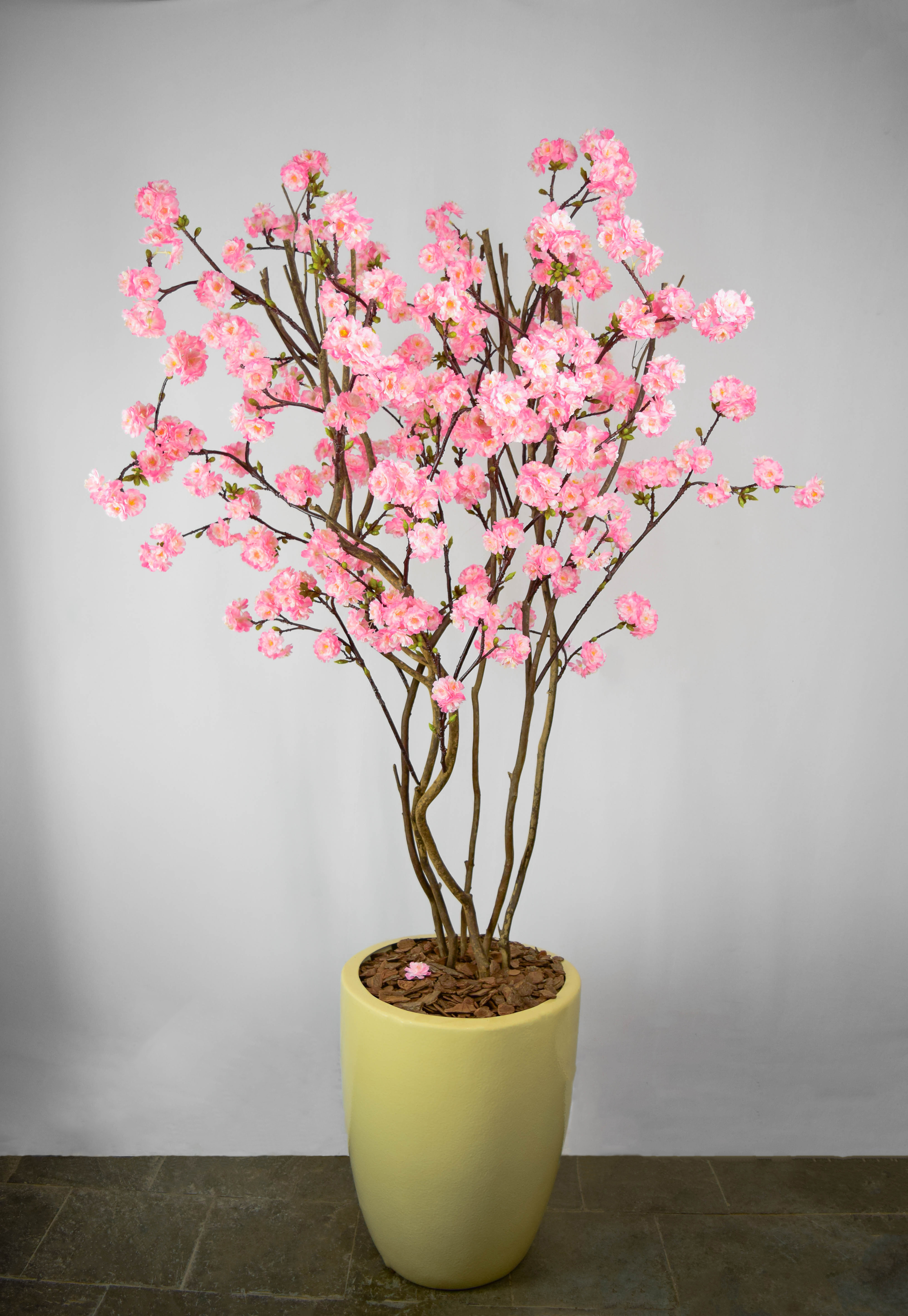 Cerejeira Rosa
