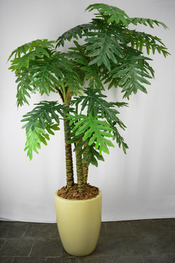 Palmeira Caladium x3