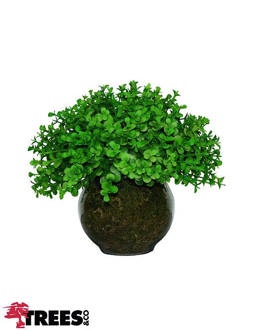 Meia Bola_Eucalipto Verde - P