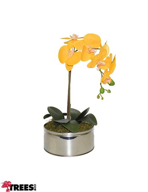 Orquídea Amarela_Vaso Inox