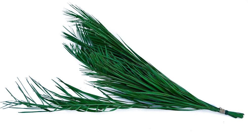 Preservado Palmeira do Campo