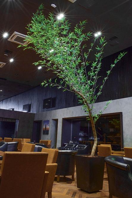 Bambu Musso