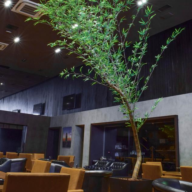 Bambu Avulso