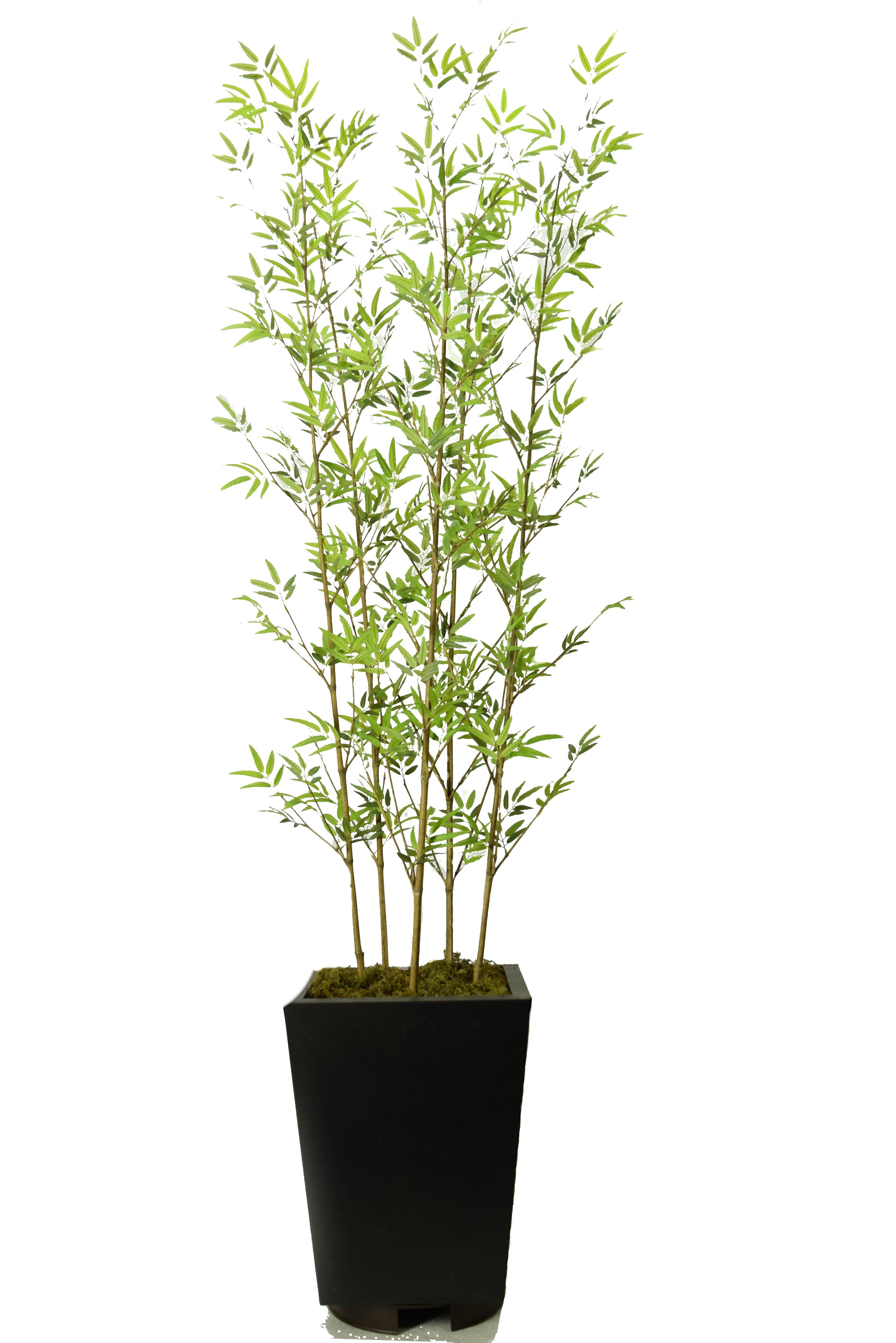 Bambu x5