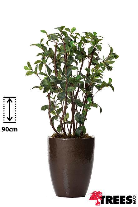 Arbusto Polka Verde