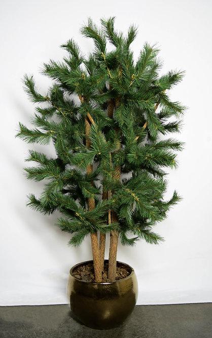 Árvore Pinheiro