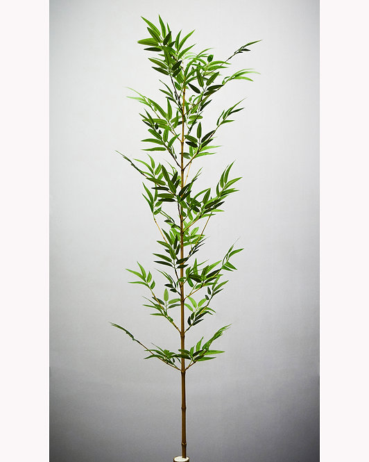 Bambu Fino