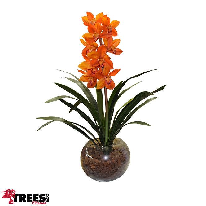 Orquídea Cymbidium Laranja VD Aquário G