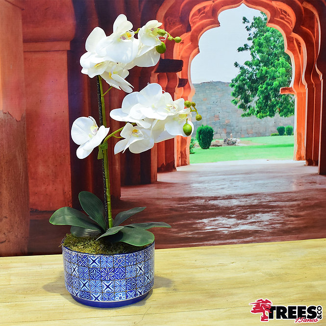 Orquídea Real Branca x2_Vaso Pintura Portuguesa