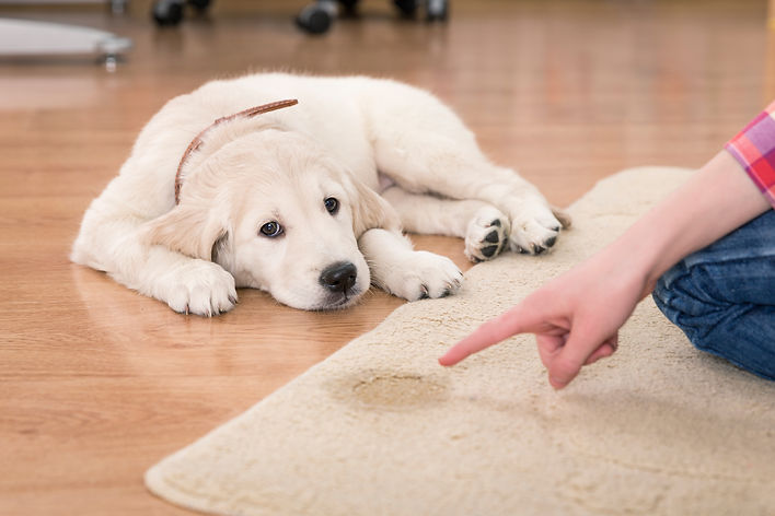 affrodable carpet cleaning