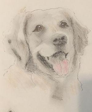 Golden sketch (4).JPG