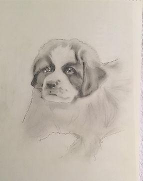 st bernard pup (2).JPG