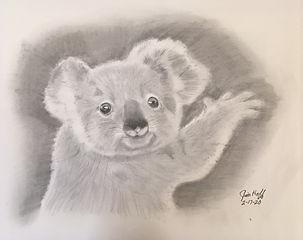 Koala sketch (2).JPG