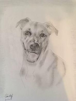 Sammy sketch.JPG