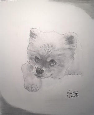 Richard's Pomeranian sketch (3).JPG