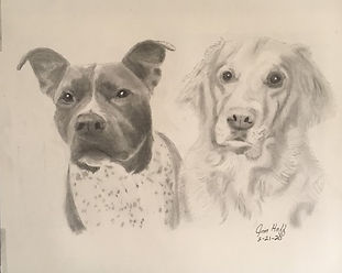 Sheila's Pitty and Golden Sketch (2).JPG
