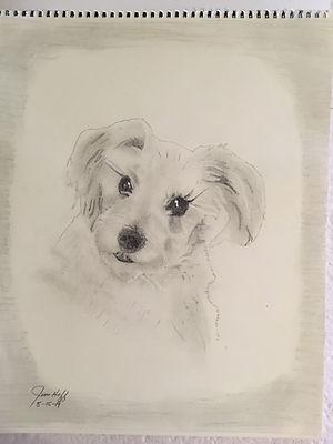 Misty Rose Sketch.JPG