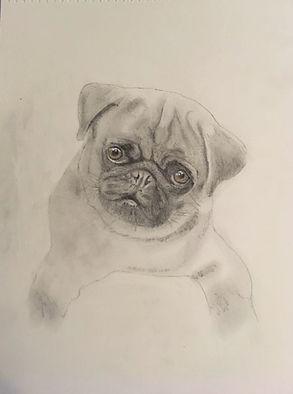 pug pup sketch (2).JPG