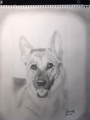 Tina's Shepherd Sketch.JPG
