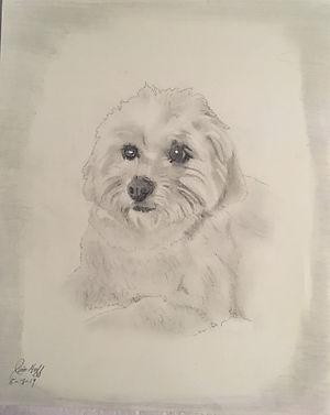 Maggie sketch.JPG