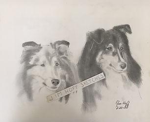 Sheila's 2 Sheltys Sketch (3).JPG