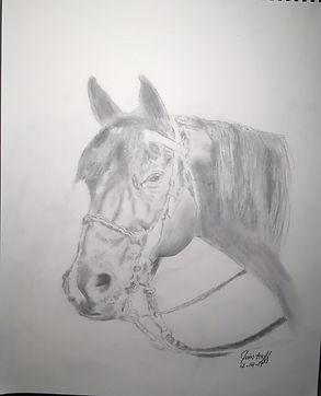 Christy's Horse Sketch (2).JPG