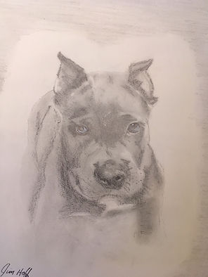 Robin's Pup sketch.JPG