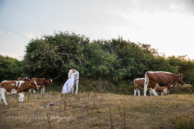 Zwangerschapsfoto's tussen de koeien